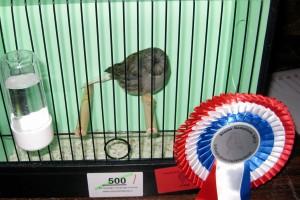 2013 Herkenbosch kooi 500