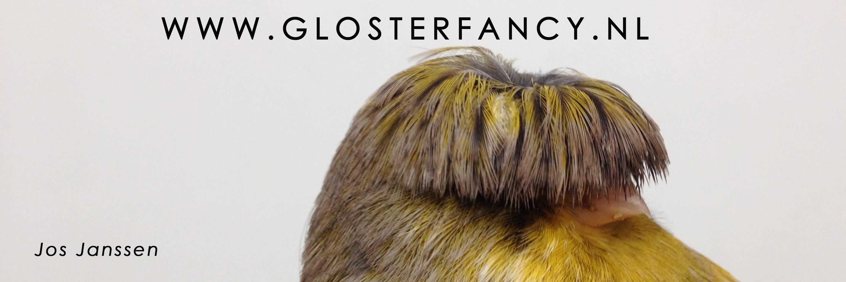 WWW.GLOSTERFANCY jpg 2